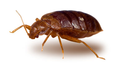 Bed Bug Extermination, New York, New Jersey
