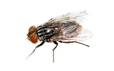 pest-slider-flies