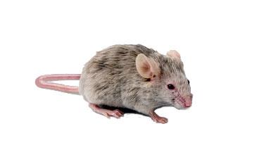 pest-slider-mice