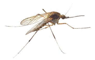 pest-slider-mosquito