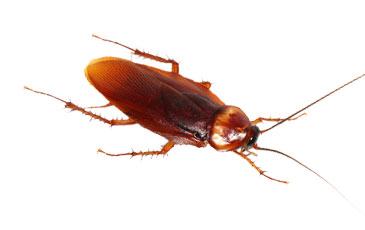pest-slider-roaches