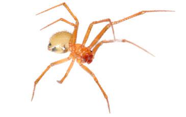 pest-slider-spiders