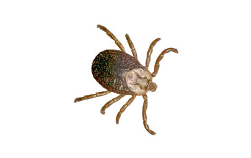 pest-slider-ticks